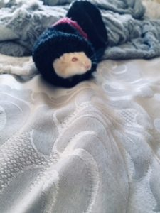 Josies hamster